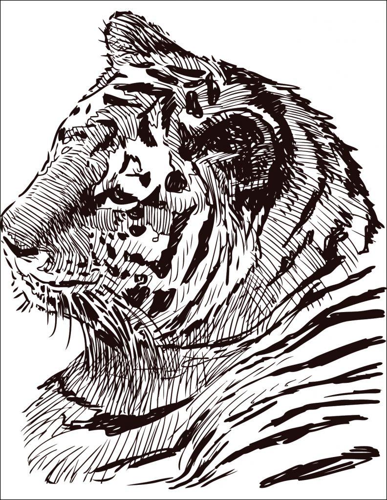 dessin à colorier gratuit félin tigre - Artherapie.ca