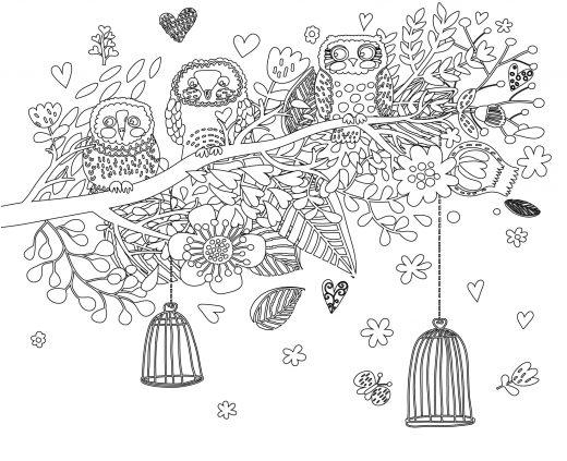 Image de chouette et cages à colorier
