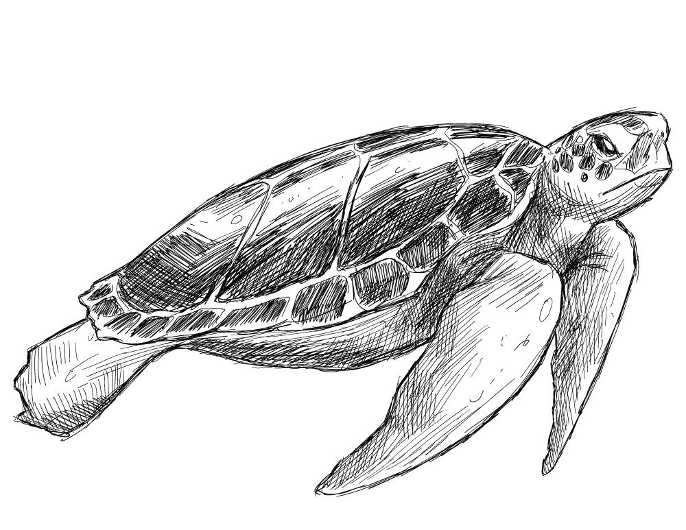 Image à imprimer pour adulte tortue gratuite