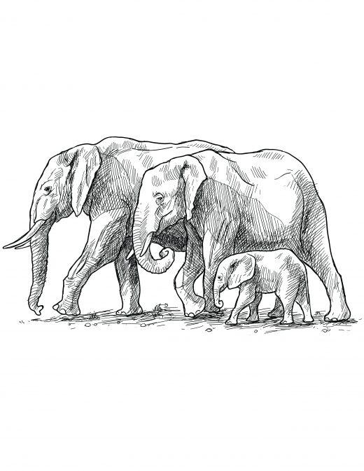 Coloriage grayscale gratuit, Famille éléphant