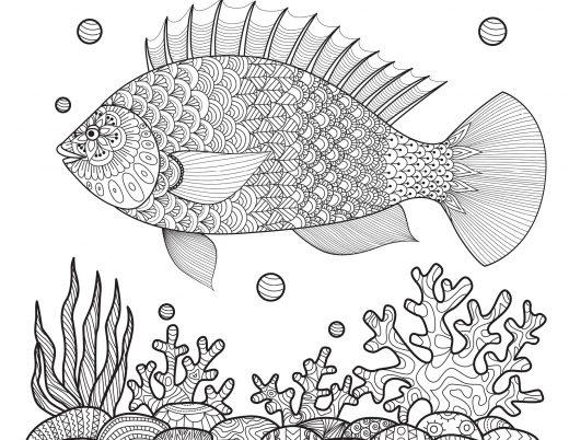 Dessin poisson coloriages été à imprimer gratuitement