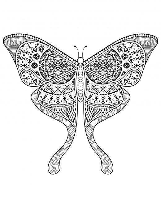 Dessin pour adulte délicat papillon à imprimer difficile